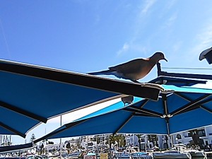 IMG_20150405_154249 Dove above Marina